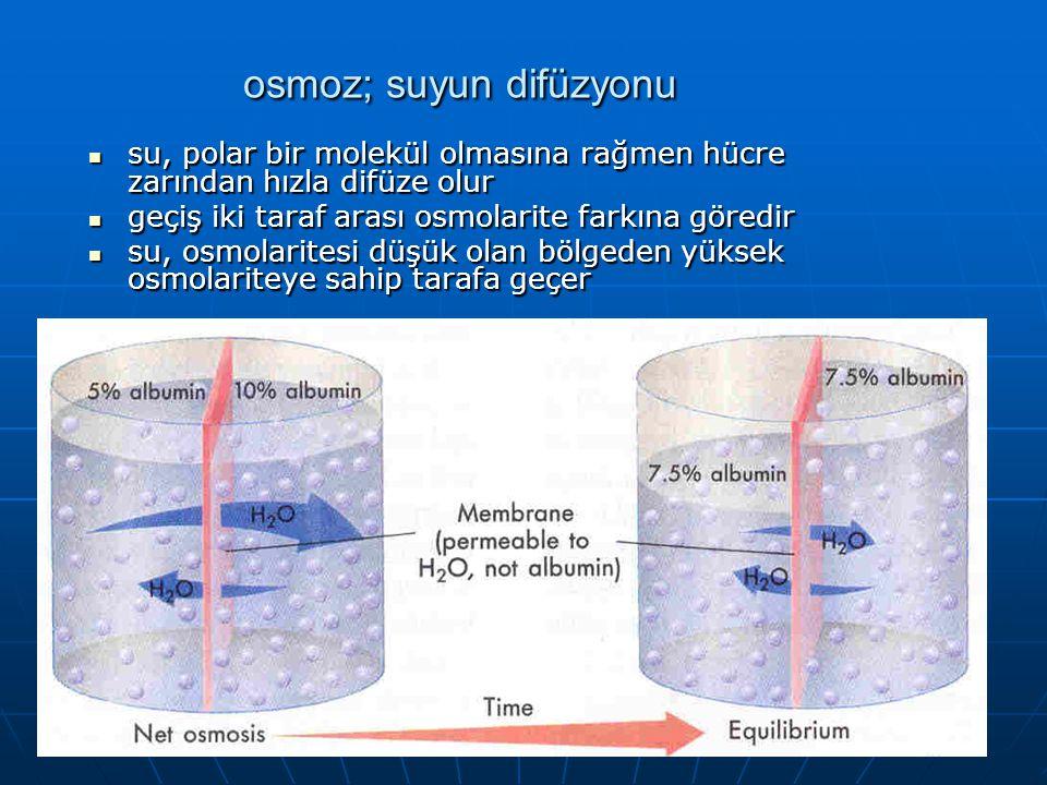osmoz; suyun difüzyonu