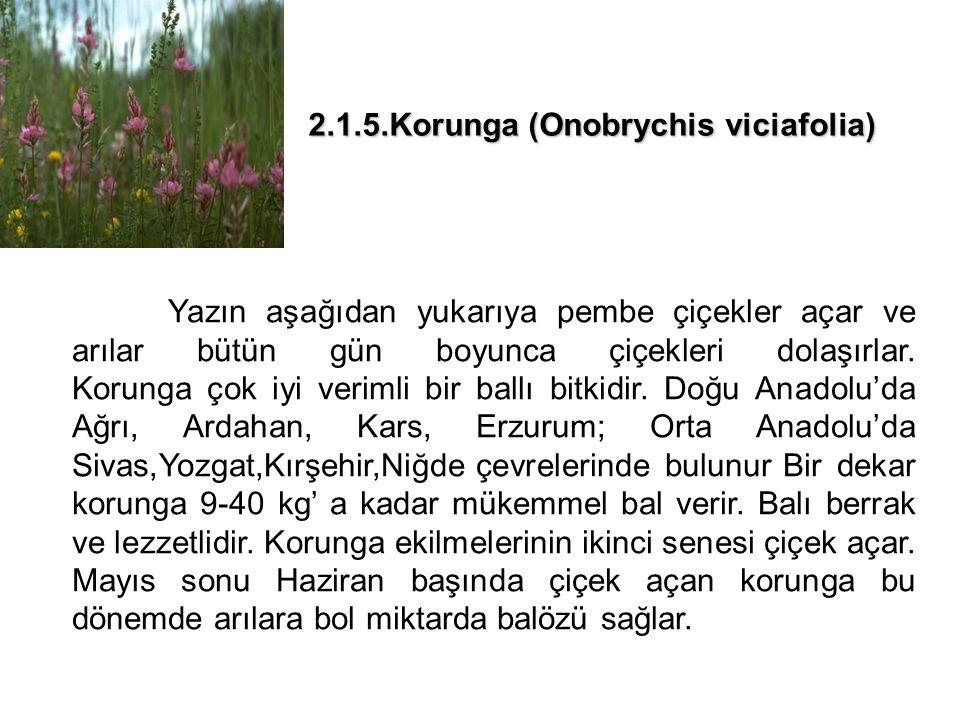 2.1.5.Korunga (Onobrychis viciafolia)