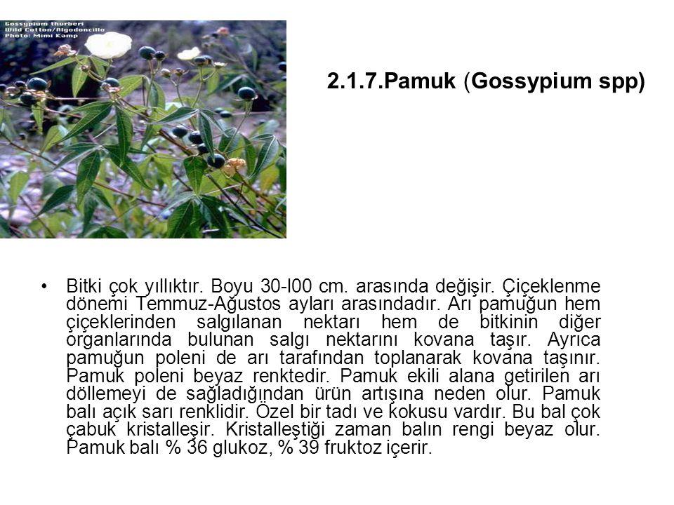 2.1.7.Pamuk (Gossypium spp)