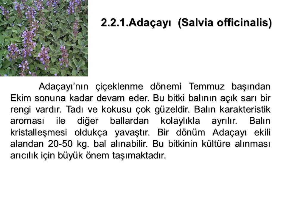 2.2.1.Adaçayı (Salvia officinalis)