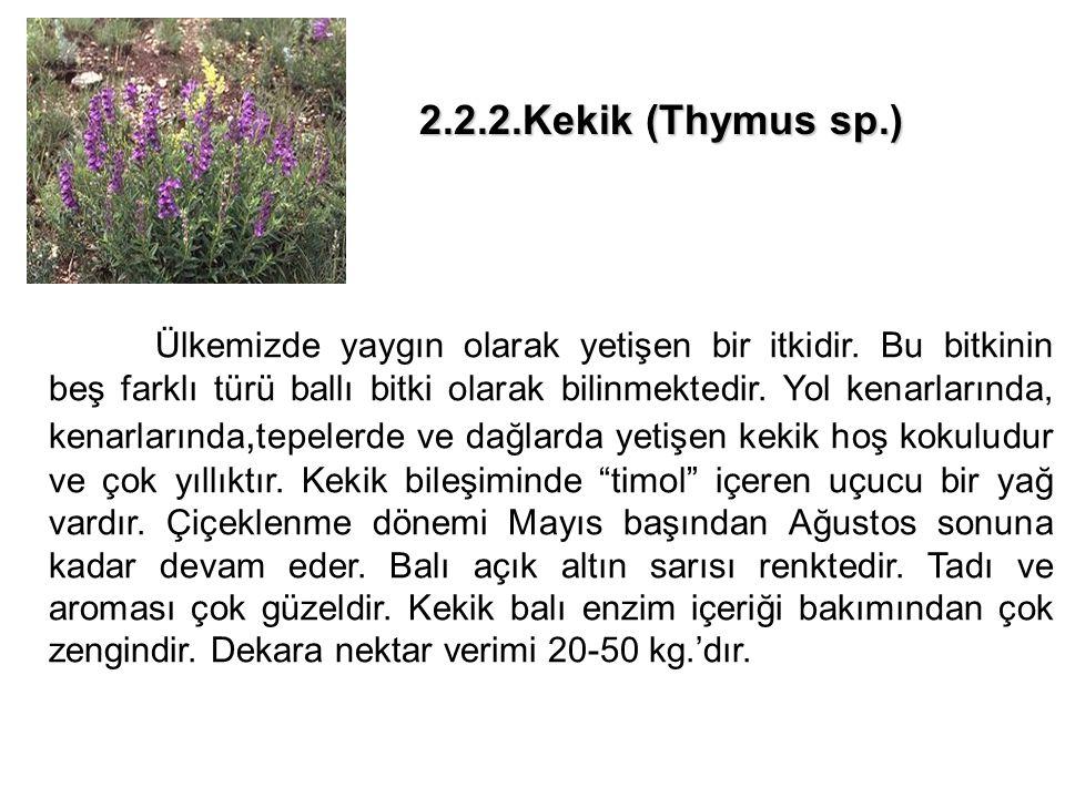 2.2.2.Kekik (Thymus sp.)