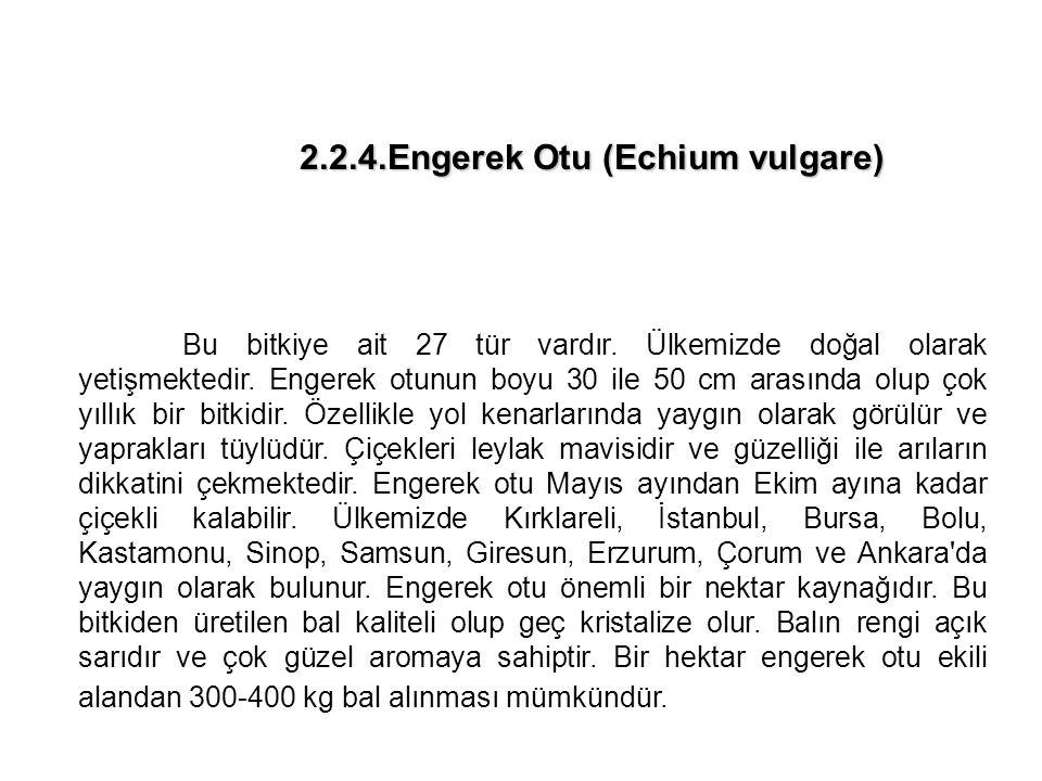 2.2.4.Engerek Otu (Echium vulgare)