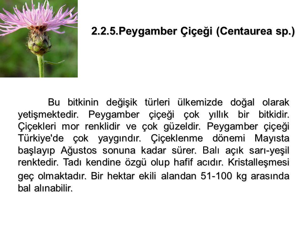 2.2.5.Peygamber Çiçeği (Centaurea sp.)