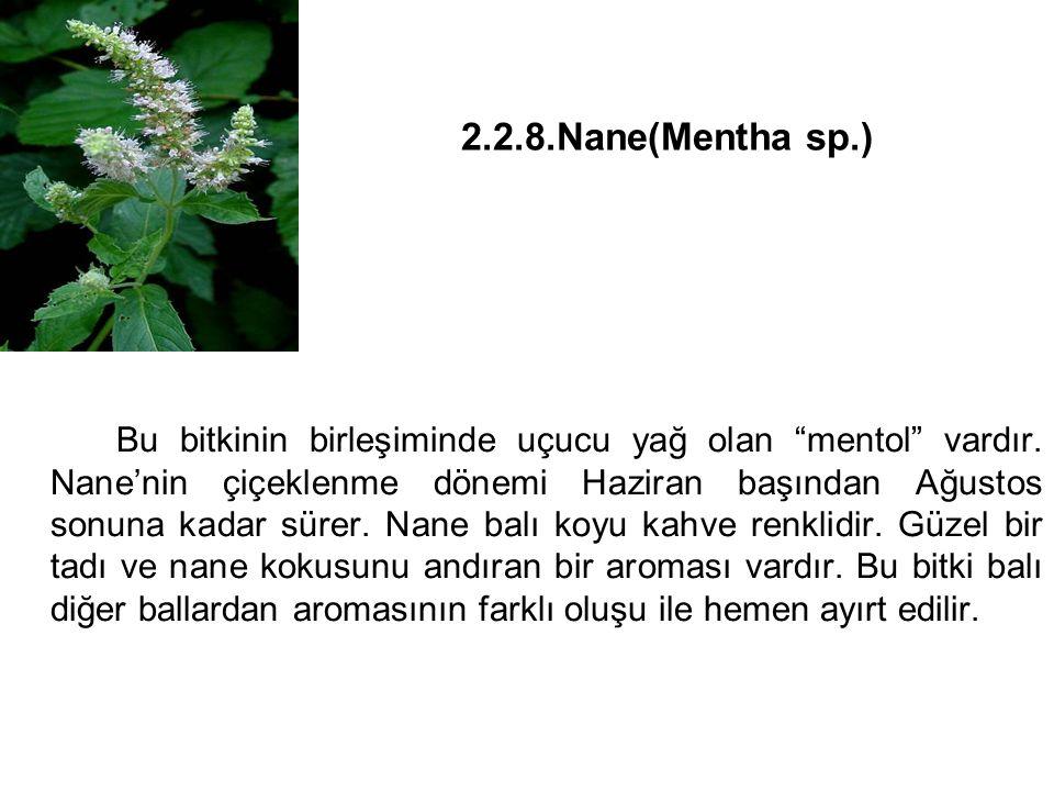 2.2.8.Nane(Mentha sp.)