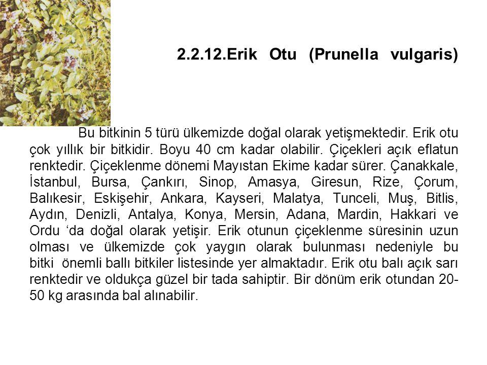 2. 2. 12. Erik Otu (Prunella vulgaris)