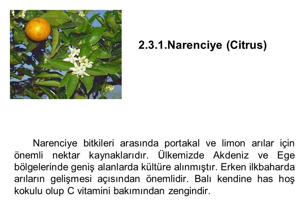 2.3.1.Narenciye (Citrus)