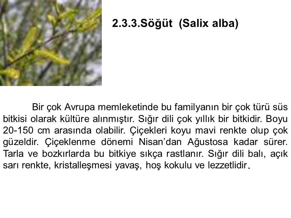 2.3.3.Söğüt (Salix alba)