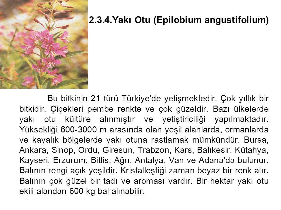 2. 3. 4. Yakı Otu (Epilobium angustifolium)