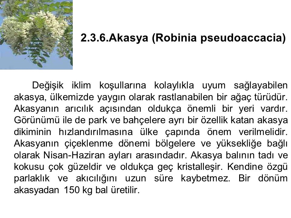2.3.6.Akasya (Robinia pseudoaccacia)