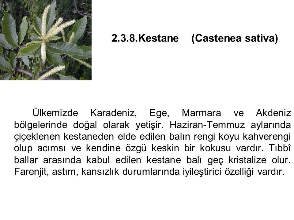 2.3.8.Kestane (Castenea sativa)