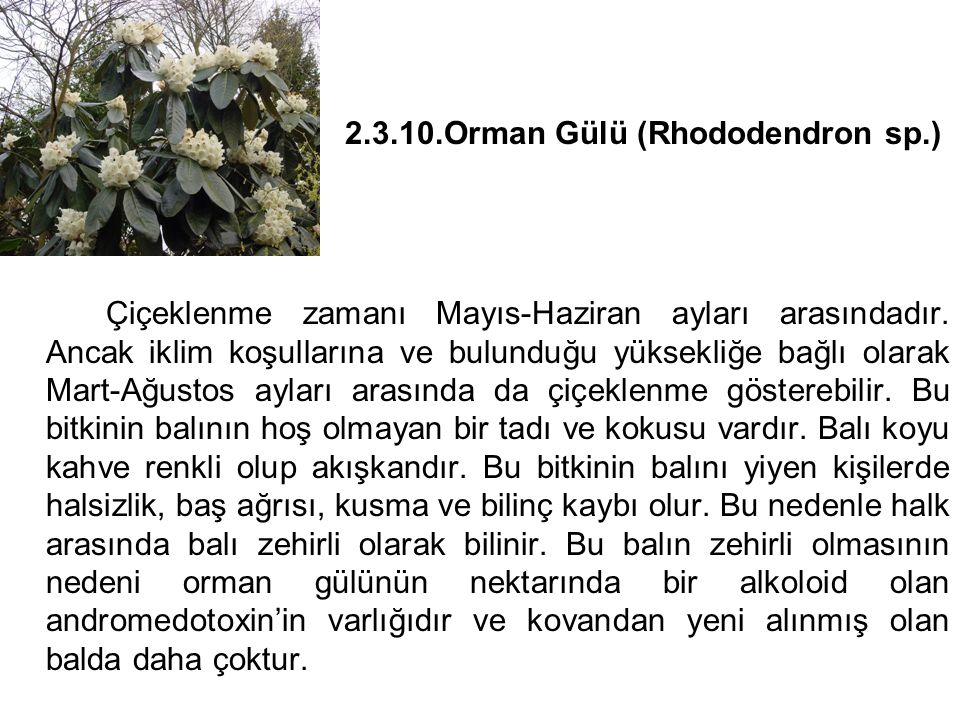 2.3.10.Orman Gülü (Rhododendron sp.)