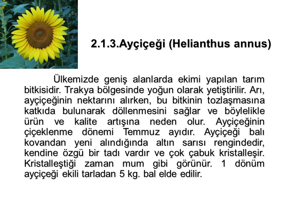 2.1.3.Ayçiçeği (Helianthus annus)