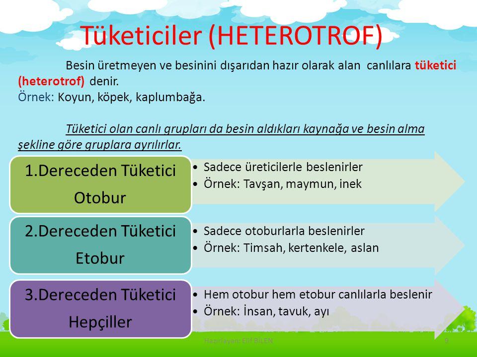 Tüketiciler (HETEROTROF)