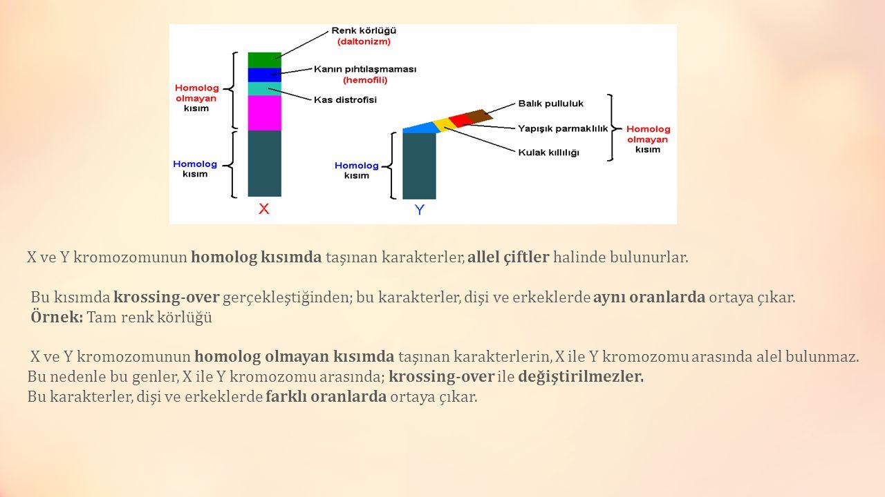 X ve Y kromozomunun homolog kısımda taşınan karakterler, allel çiftler halinde bulunurlar. Bu kısımda krossing-over gerçekleştiğinden; bu karakterler, dişi ve erkeklerde aynı oranlarda ortaya çıkar.