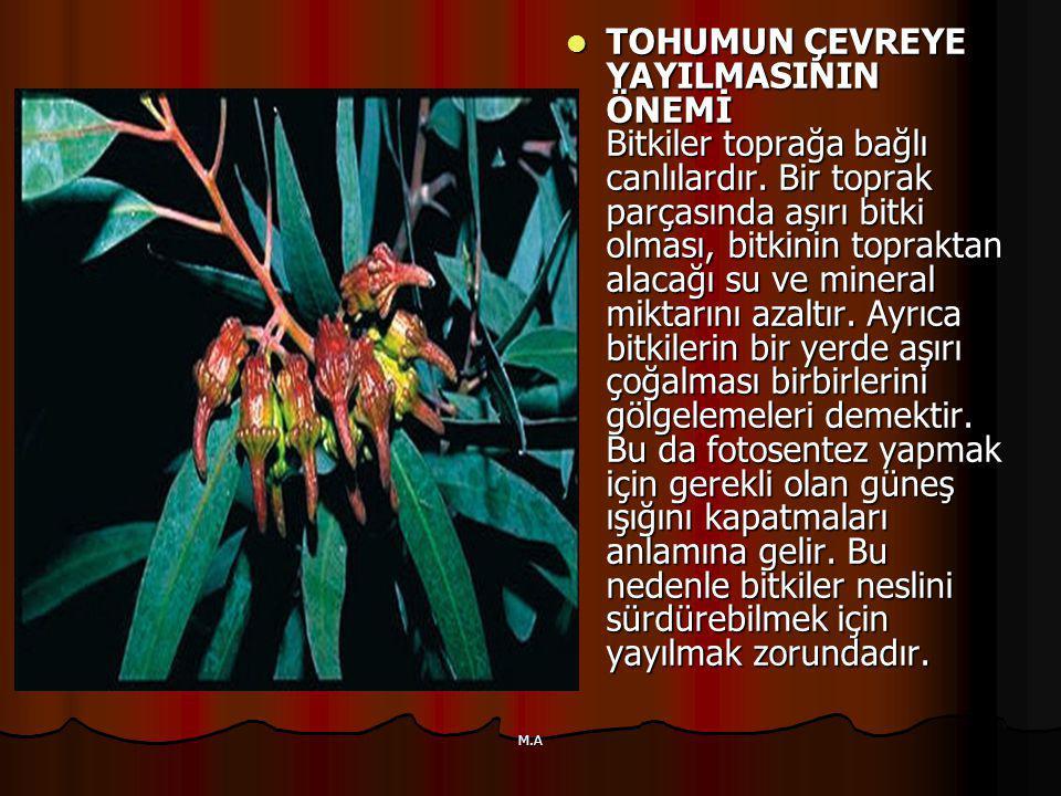 TOHUMUN ÇEVREYE YAYILMASININ ÖNEMİ Bitkiler toprağa bağlı canlılardır