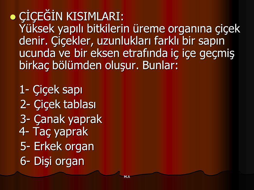 3- Çanak yaprak 4- Taç yaprak 5- Erkek organ 6- Dişi organ