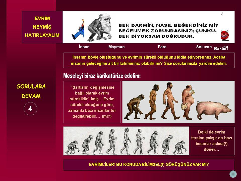 4 SORULARA DEVAM EVRİM NEYMİŞ HATIRLAYALIM İnsan Maymun Fare Solucan