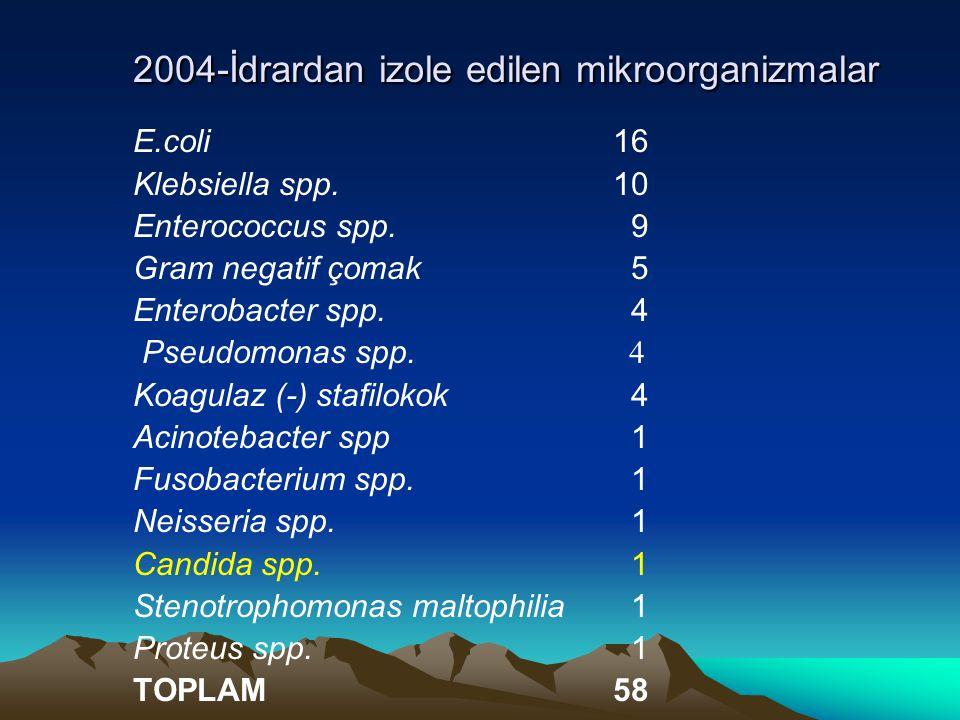 2004-İdrardan izole edilen mikroorganizmalar