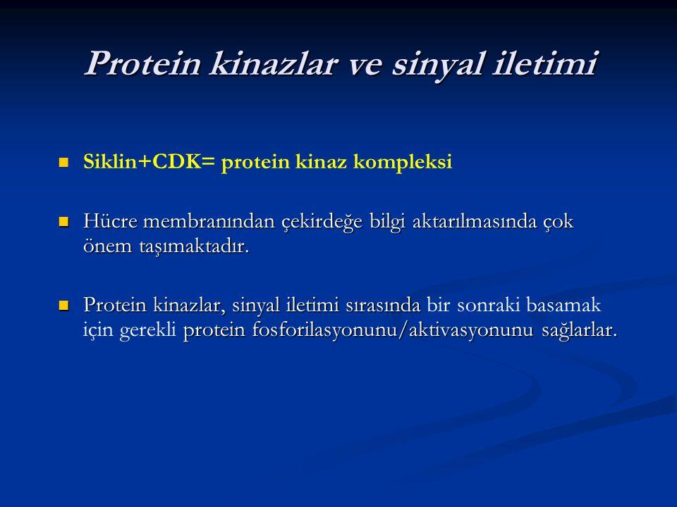 Protein kinazlar ve sinyal iletimi