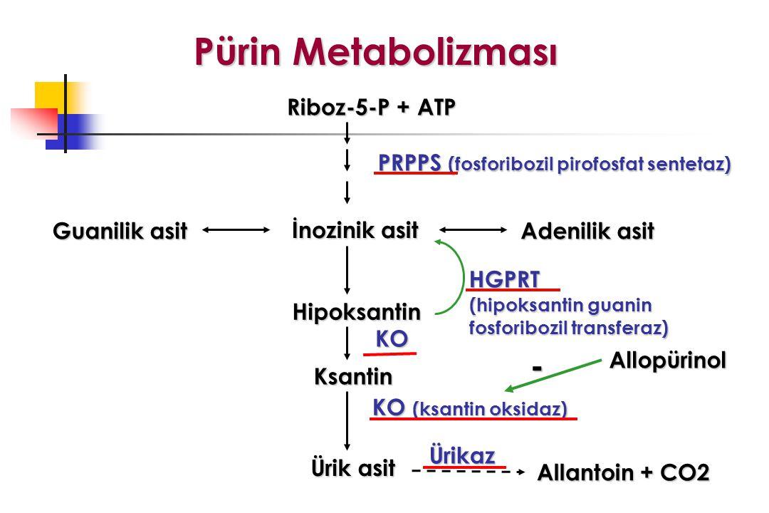 Pürin Metabolizması - Riboz-5-P + ATP