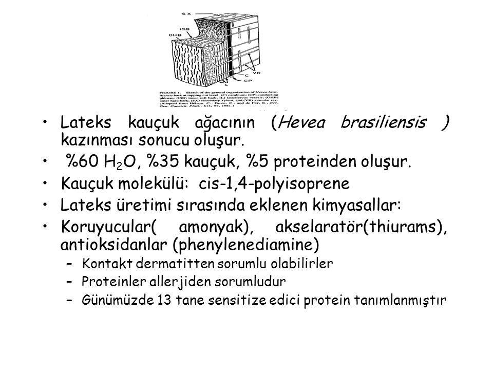 Lateks kauçuk ağacının (Hevea brasiliensis ) kazınması sonucu oluşur.