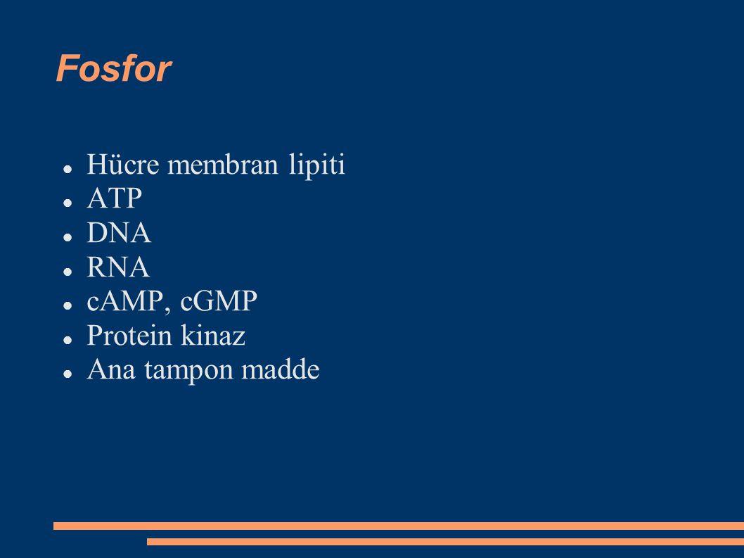 Fosfor Hücre membran lipiti ATP DNA RNA cAMP, cGMP Protein kinaz