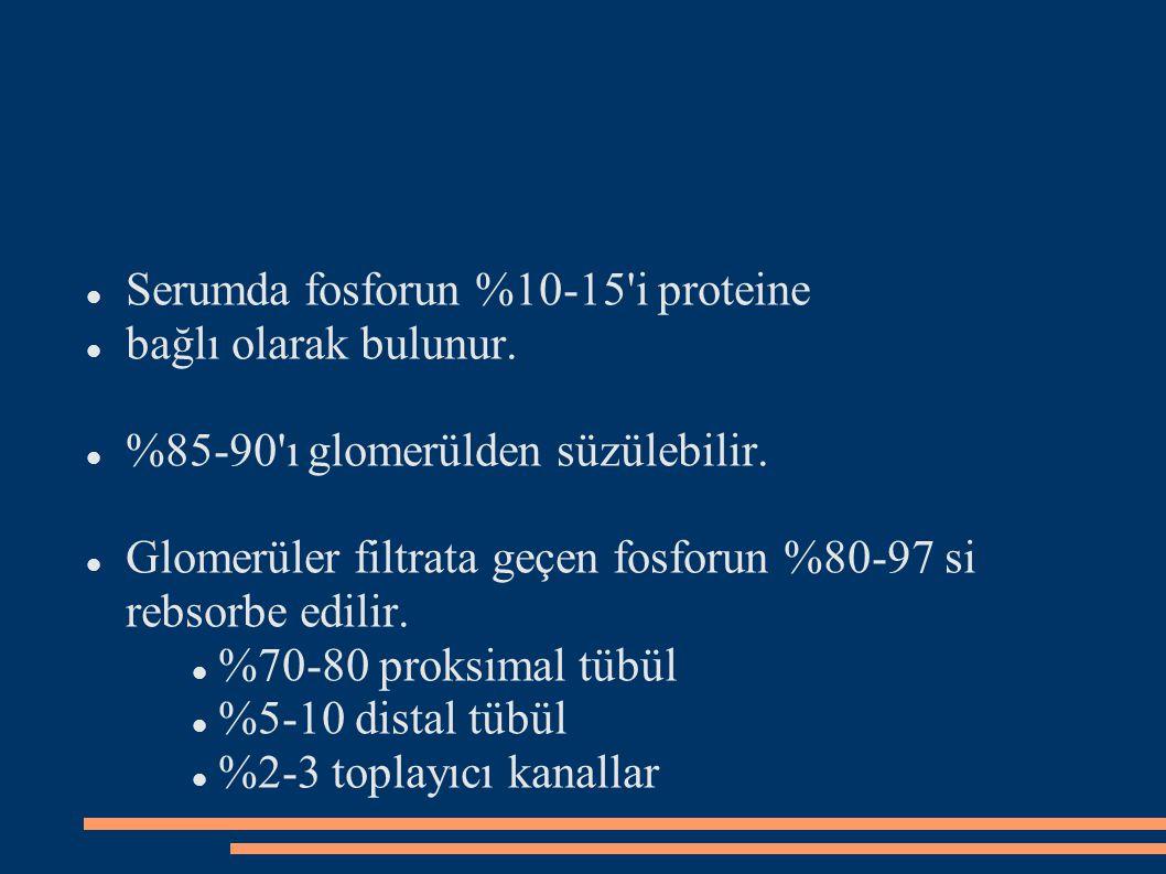 Serumda fosforun %10-15 i proteine