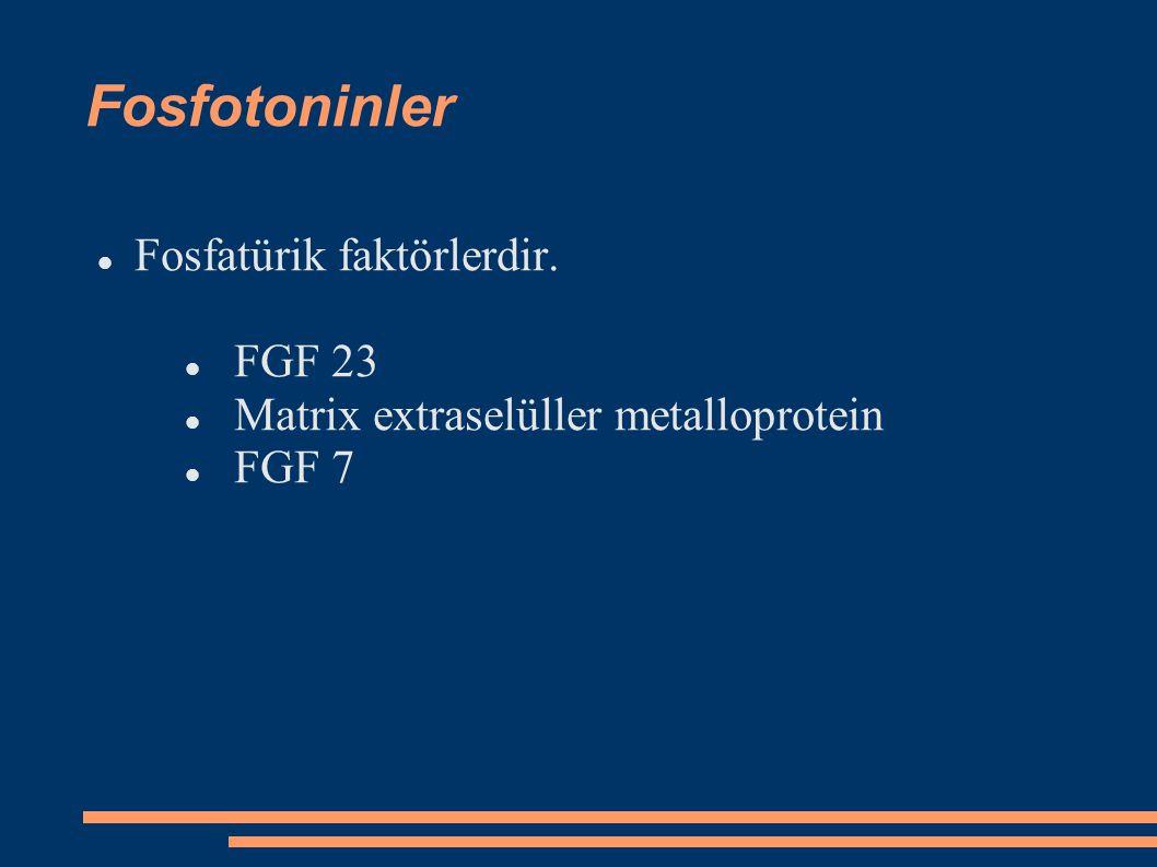 Fosfotoninler Fosfatürik faktörlerdir. FGF 23