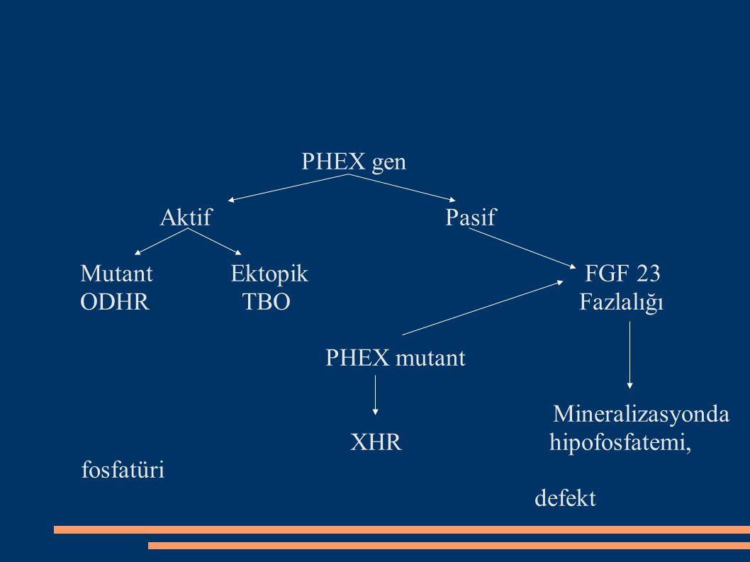 PHEX gen Aktif Pasif. Mutant Ektopik FGF 23.