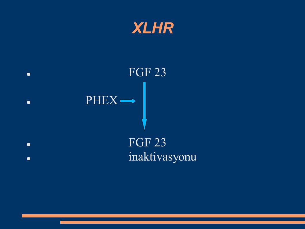 XLHR FGF 23 PHEX inaktivasyonu