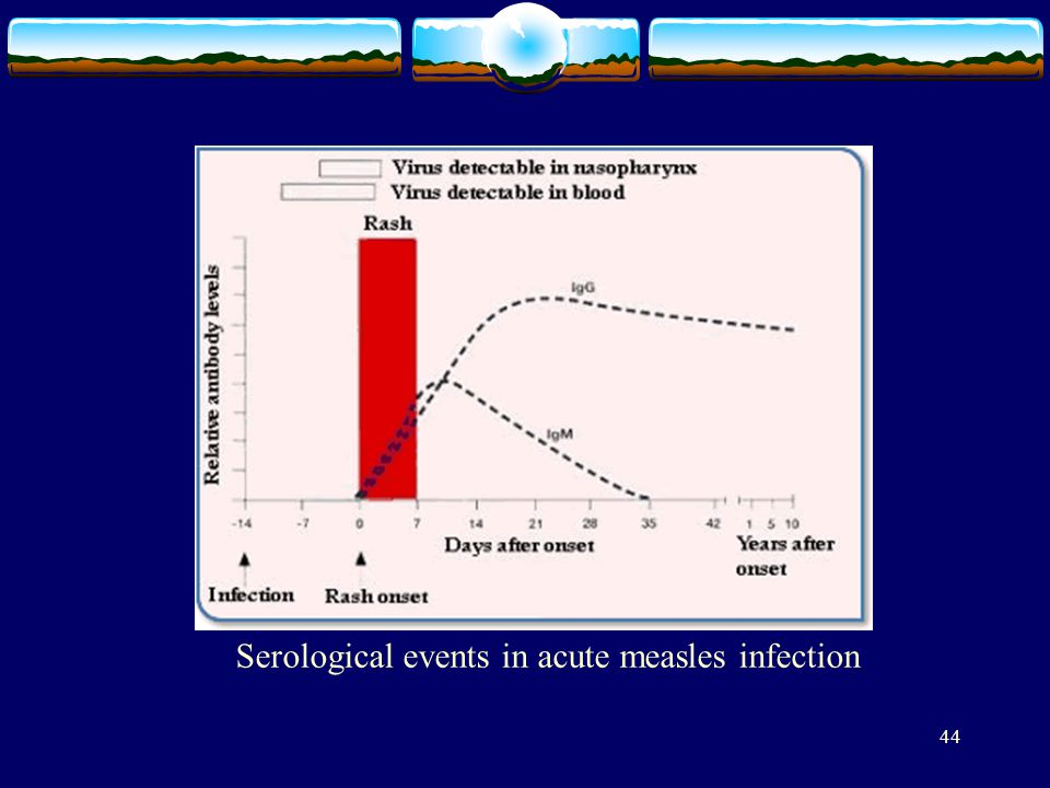 Serological events in acute measles infection
