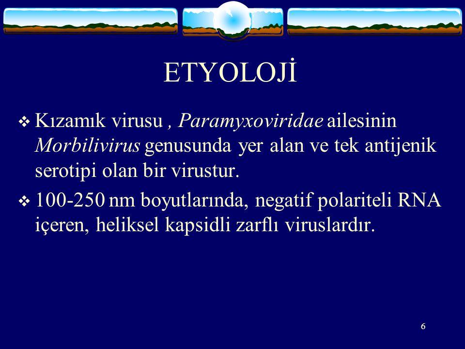 ETYOLOJİ Kızamık virusu , Paramyxoviridae ailesinin Morbilivirus genusunda yer alan ve tek antijenik serotipi olan bir virustur.