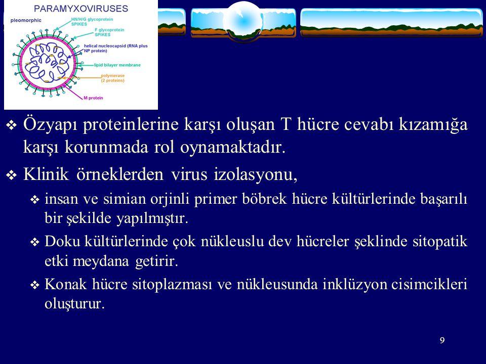 Klinik örneklerden virus izolasyonu,