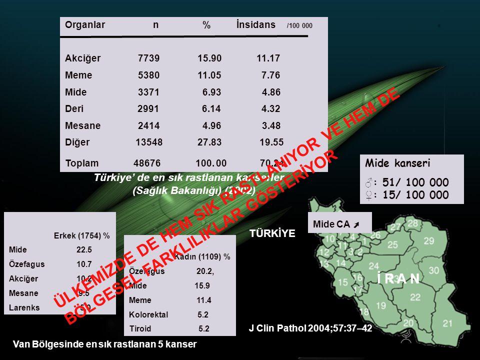 Organlar n % İnsidans /100 000 Akciğer 7739 15.90 11.17.