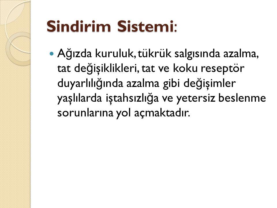 Sindirim Sistemi: