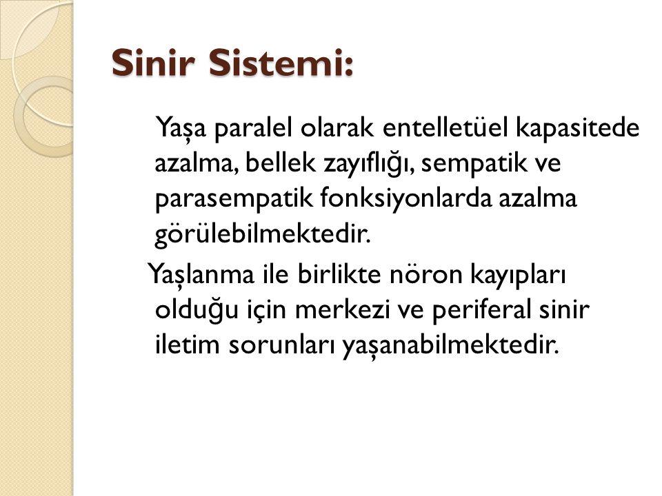 Sinir Sistemi: