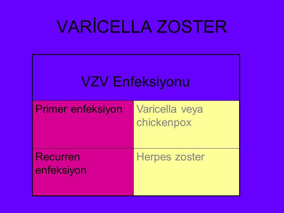 VARİCELLA ZOSTER VZV Enfeksiyonu Primer enfeksiyon