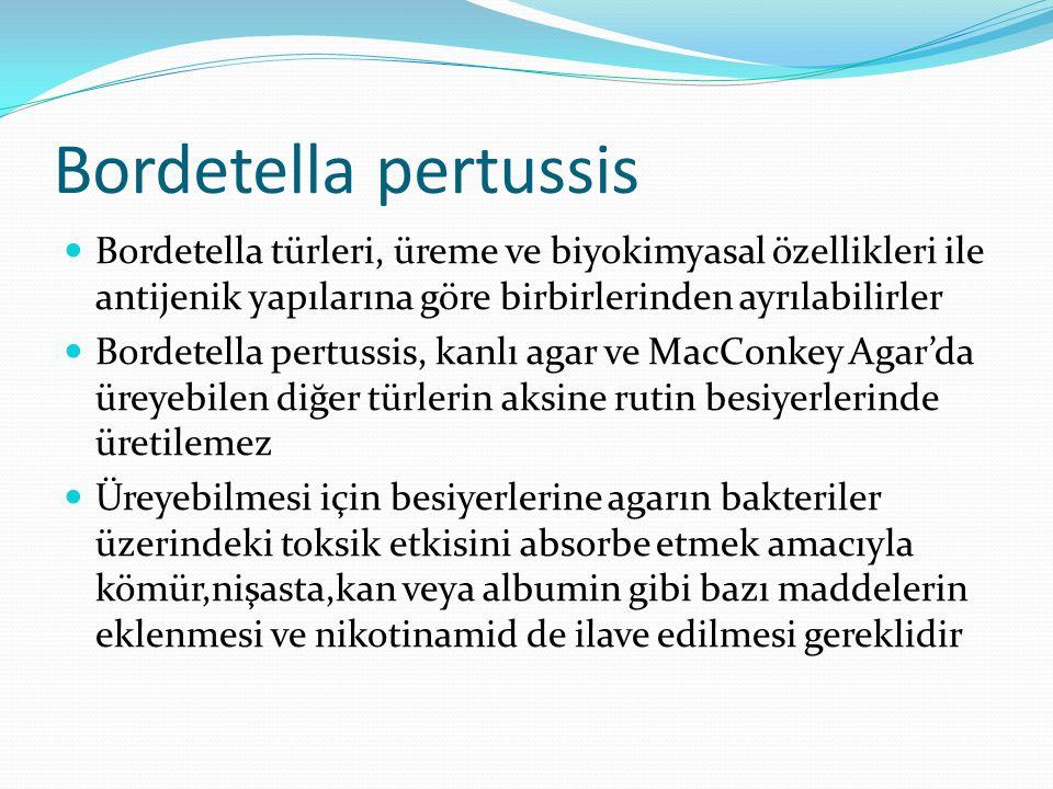 Bordetella pertussis Bordetella türleri, üreme ve biyokimyasal özellikleri ile antijenik yapılarına göre birbirlerinden ayrılabilirler.