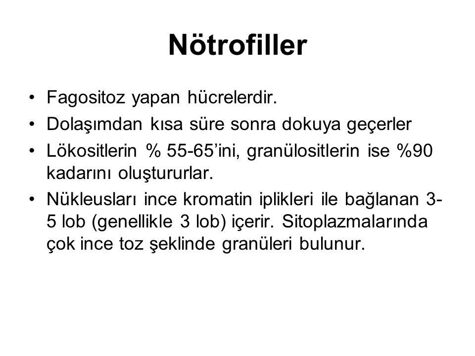 Nötrofiller Fagositoz yapan hücrelerdir.