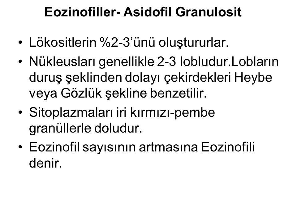 Eozinofiller- Asidofil Granulosit