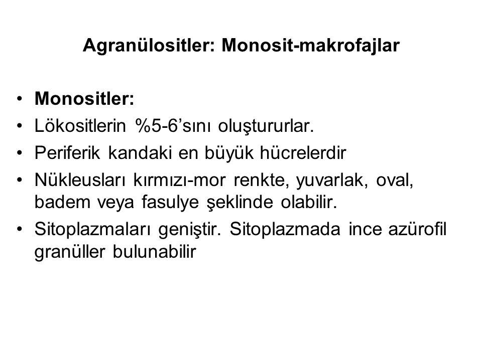 Agranülositler: Monosit-makrofajlar