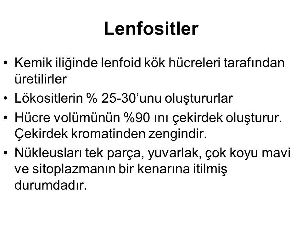 Lenfositler Kemik iliğinde lenfoid kök hücreleri tarafından üretilirler. Lökositlerin % 25-30'unu oluştururlar.