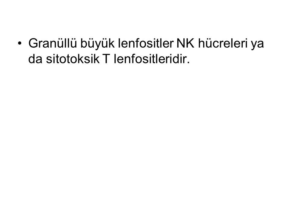 Granüllü büyük lenfositler NK hücreleri ya da sitotoksik T lenfositleridir.