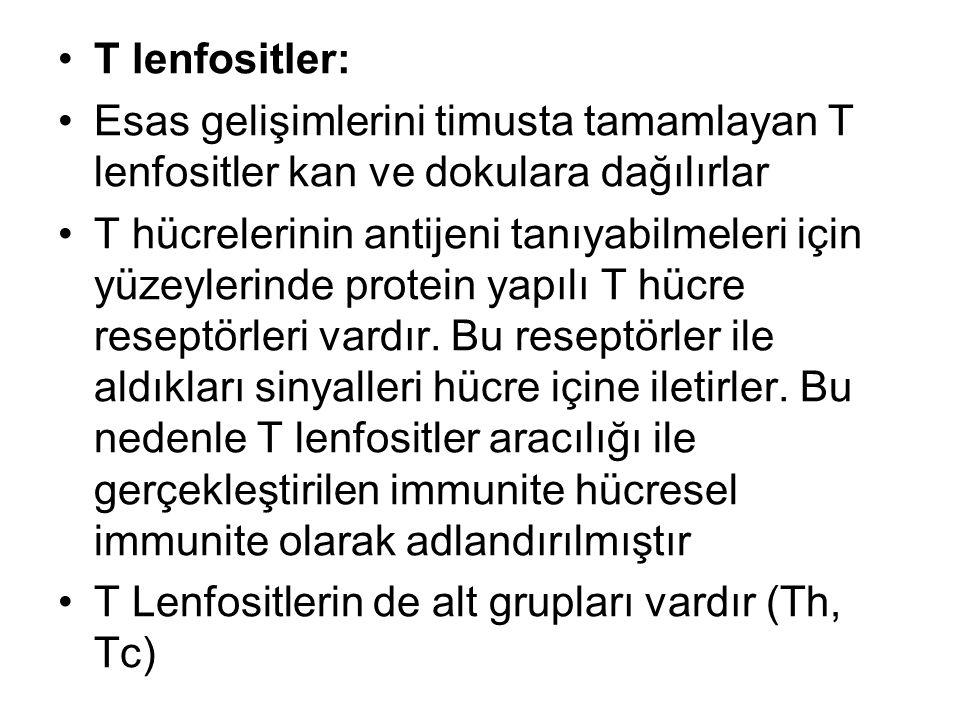 T lenfositler: Esas gelişimlerini timusta tamamlayan T lenfositler kan ve dokulara dağılırlar.