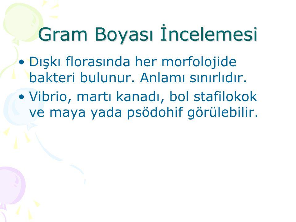 Gram Boyası İncelemesi
