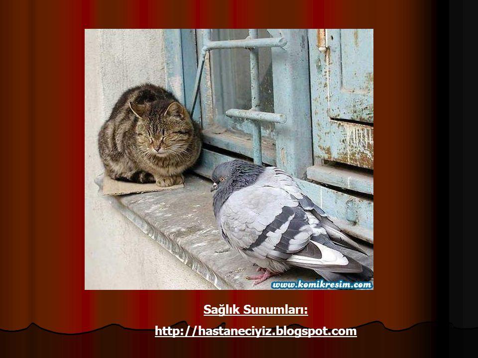 Sağlık Sunumları: http://hastaneciyiz.blogspot.com