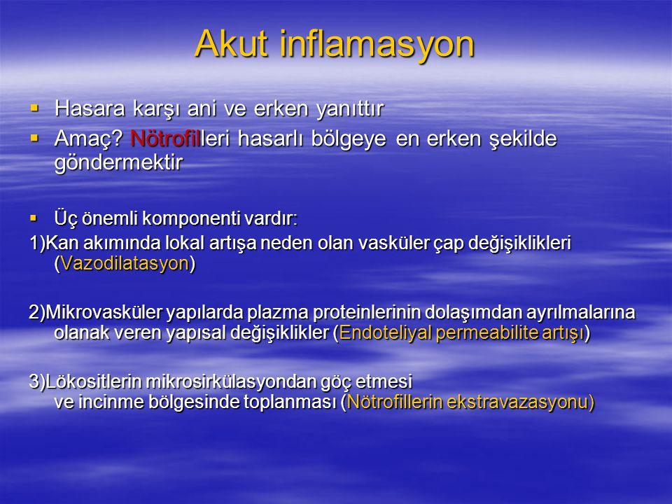 Akut inflamasyon Hasara karşı ani ve erken yanıttır