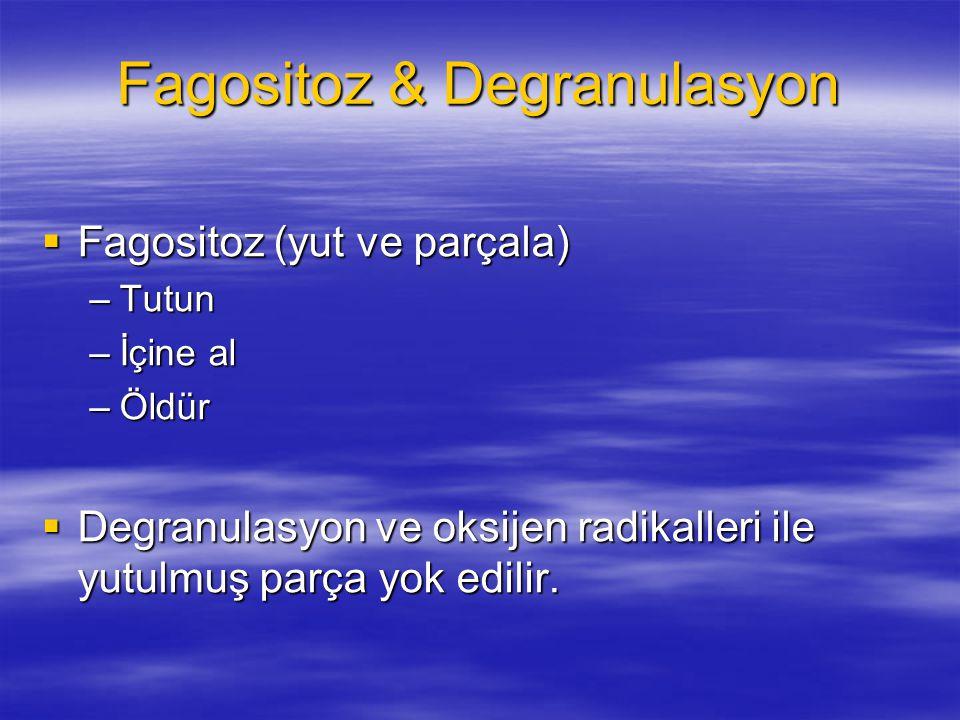 Fagositoz & Degranulasyon