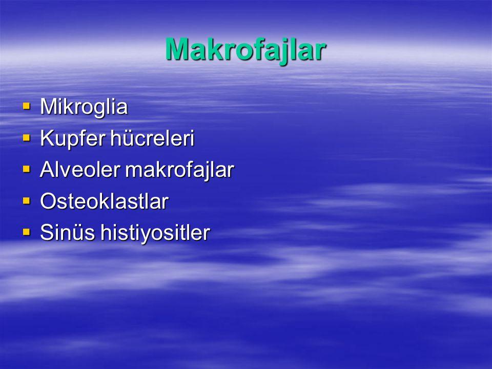 Makrofajlar Mikroglia Kupfer hücreleri Alveoler makrofajlar