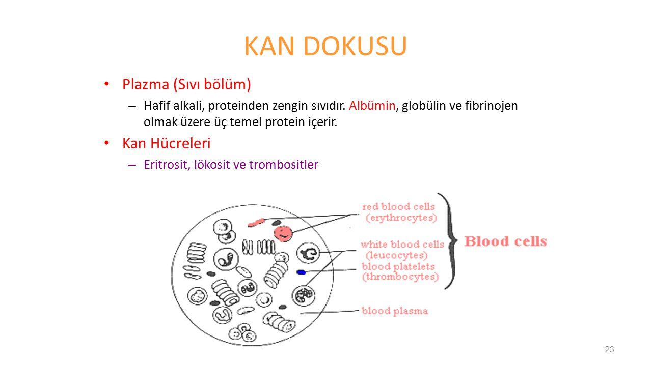 KAN DOKUSU Plazma (Sıvı bölüm) Kan Hücreleri